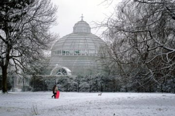 Christmas Events At Sefton Park Palm House