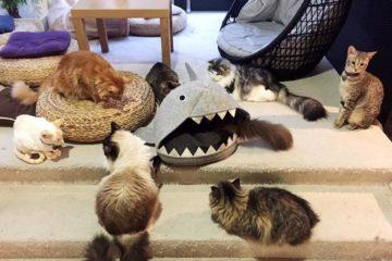 Cat Cafe Liverpool