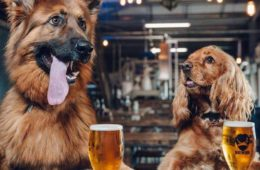 Brewdog Liverpool Dog Friendly