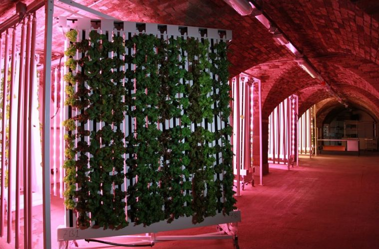 Discover Liverpool's Urban Farm Growing Green Vegetables Under The Streets of the Baltic Triangle 1